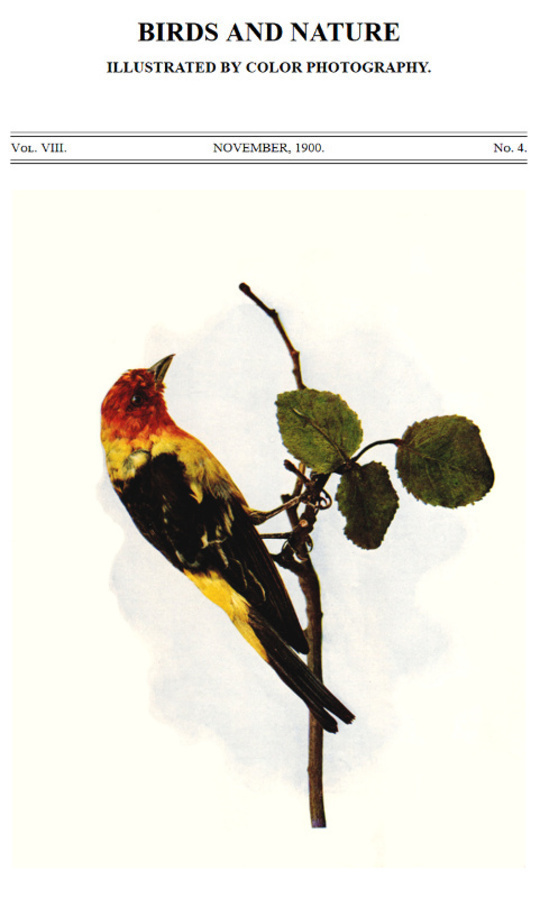Birds and Nature, Vol. VIII, No. 4, November 1900 Illustrated by Color Photography