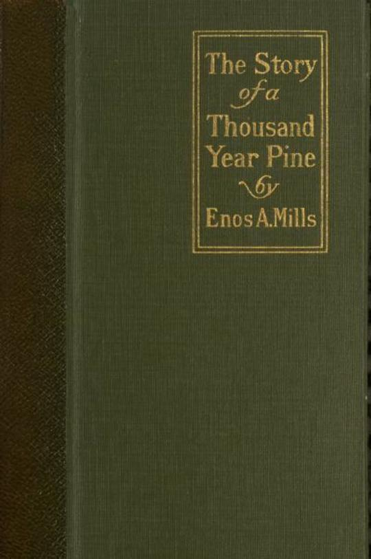 The Story of a Thousand-Year Pine