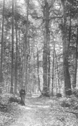 Michigan Trees A Handbook of the Native and Most Important Introduced Species