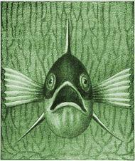 Einheimische Fische Die Süßwasserfische unsrer Heimat