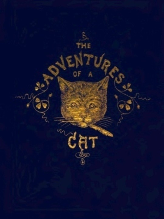 The Adventures of a Cat, and a Fine Cat Too!