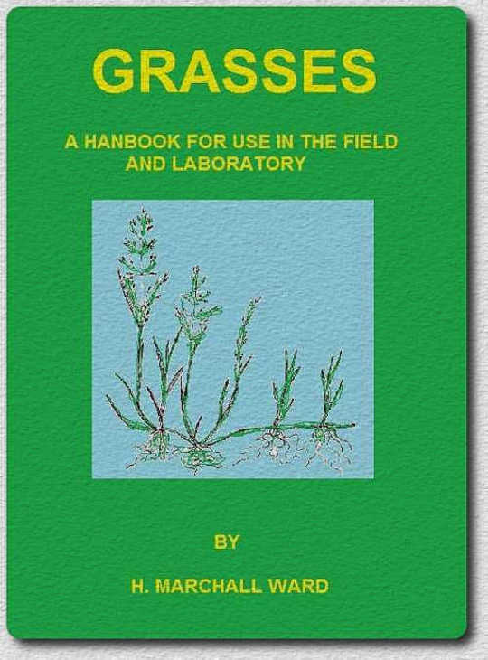 Grasses A Handbook for use in the Field and Laboratory