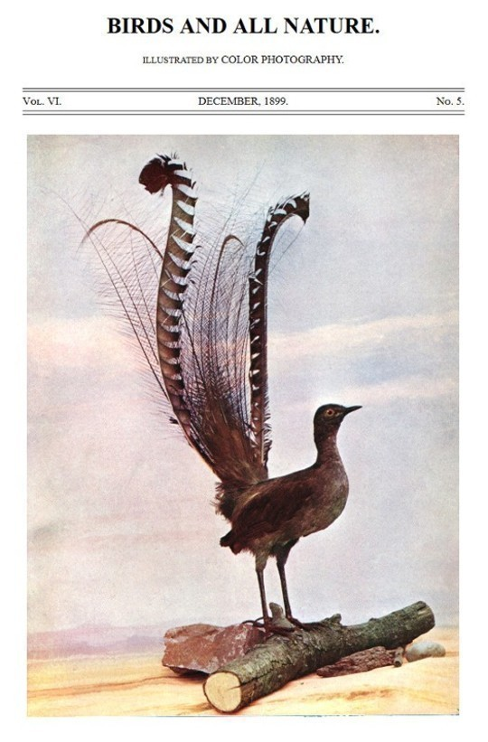 Birds and All Nature, Vol. VI, No. 5, December 1899 Illustrated by Color Photography