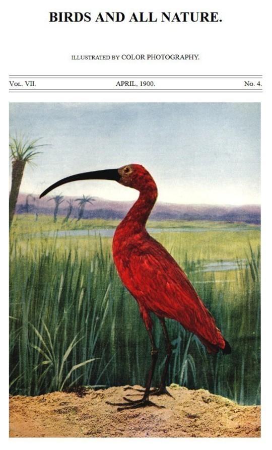 Birds and all Nature, Vol. VII, No. 4, April 1900