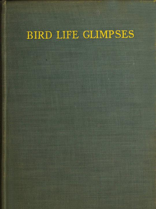 Bird Life Glimpses