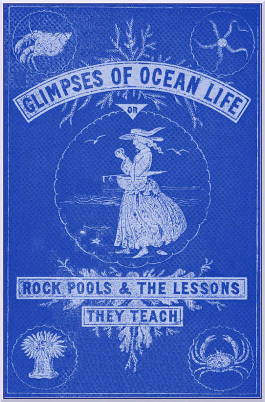 Glimpses of Ocean Life Rock-Pools and the Lessons they Teach