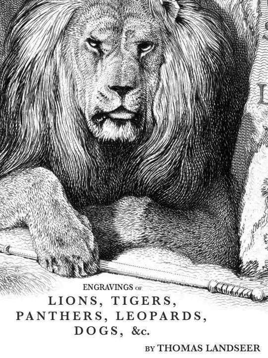 Engravings of Lions, Tigers, Panthers, Leopards, Dogs, &c.