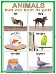 Animals That are Kept as Pets