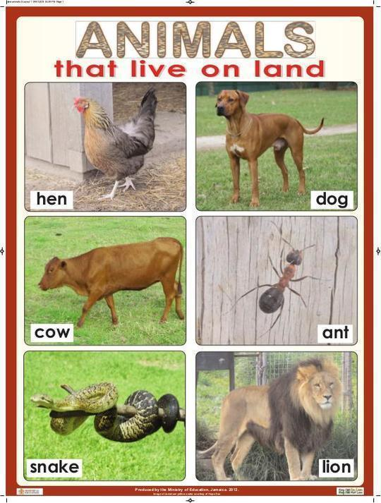 Animals That Live on Land
