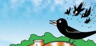 The Generous Crow
