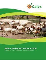 Small Ruminant Production
