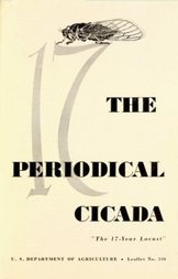 The Periodical Cicada The 17-year Locust