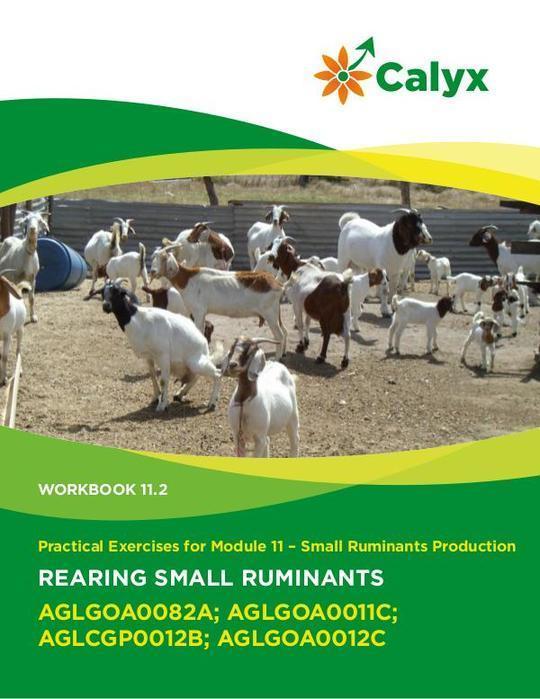 Rearing Small Ruminants